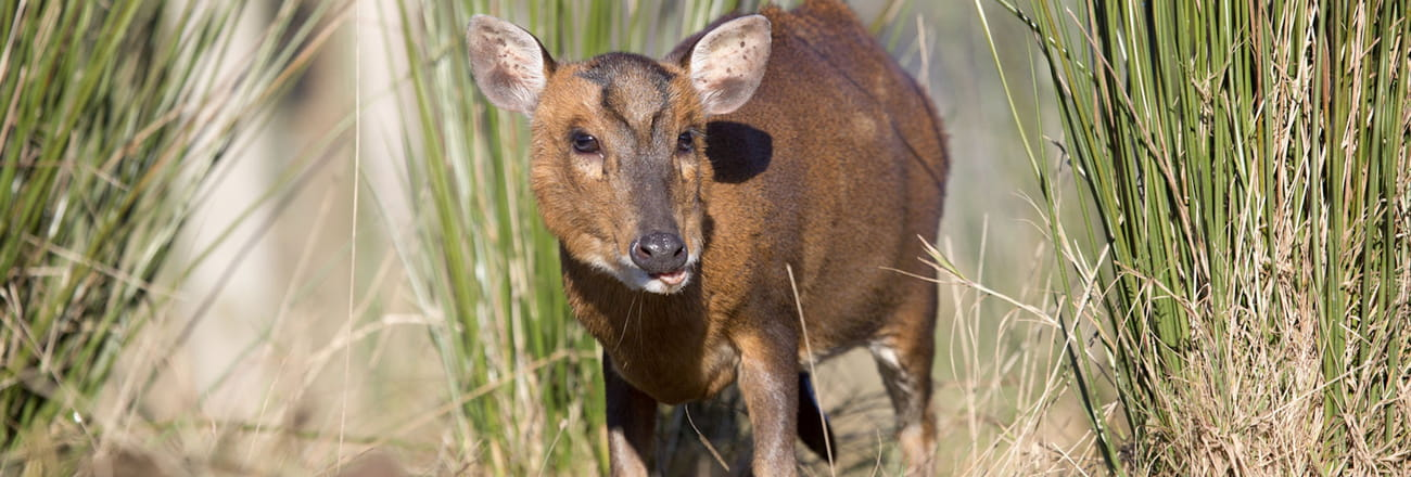 """Ces animaux (souvent) très mignons ou """"anodins""""... menacent la biodiversité!"""