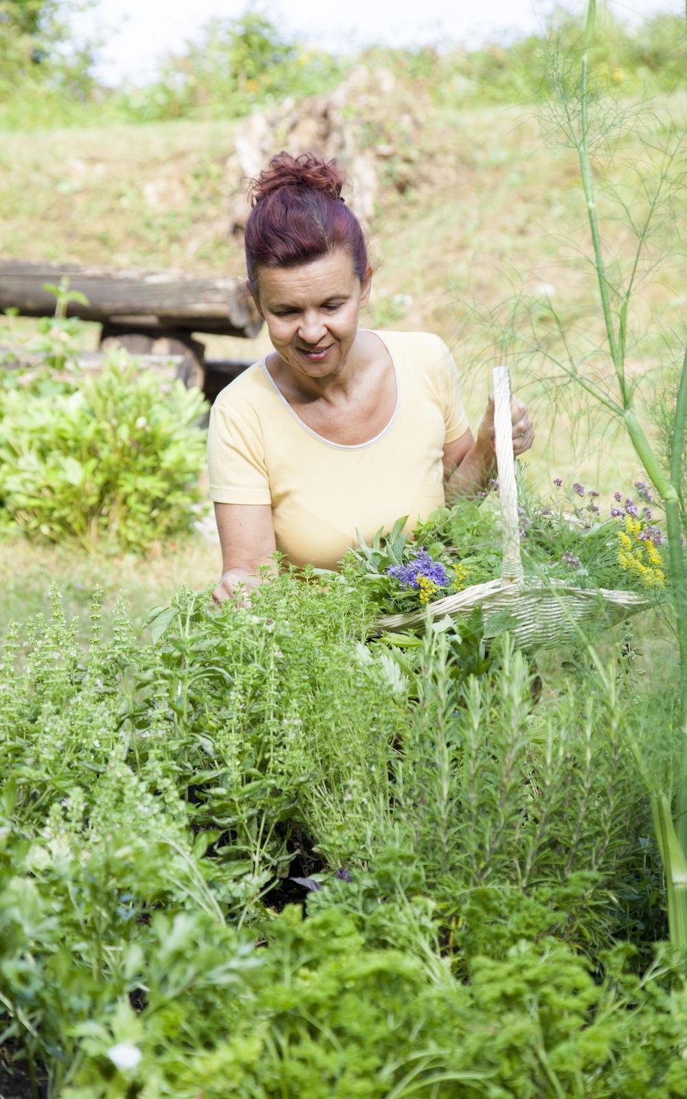 Comment Planter Le Basilic En Terre comment faire des semis en pleine terre ?