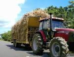 Petits revenus ou grosses fortunes : combien gagnent vraiment nos agriculteurs ?