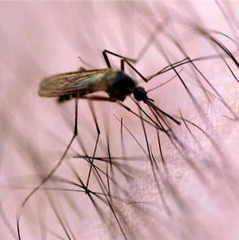 le paludisme tue 1 à 2 millions de personnes chaque année.