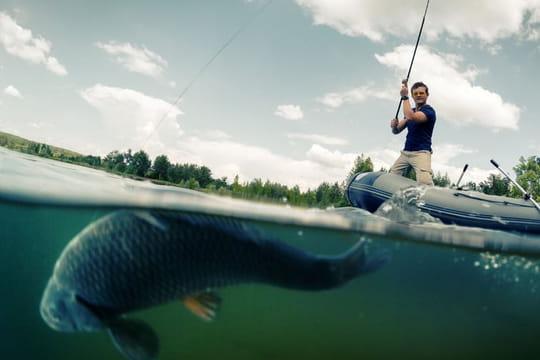 Pêche: les espèces de poissons en rivière