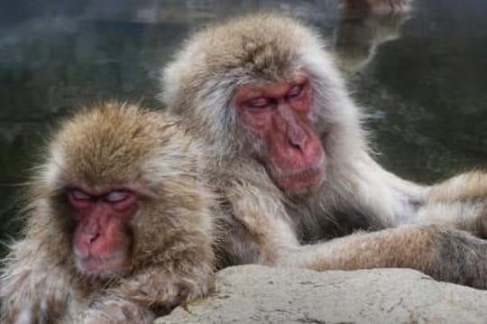 10 faits étonnants sur les animaux