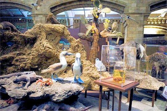 Salle de l'évolution