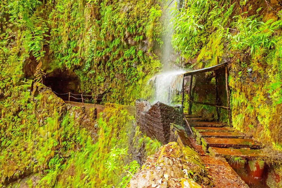 Succombez à la nature généreuse sur l'île de Madère