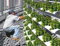 Les villes du futur : Les fermes verticales