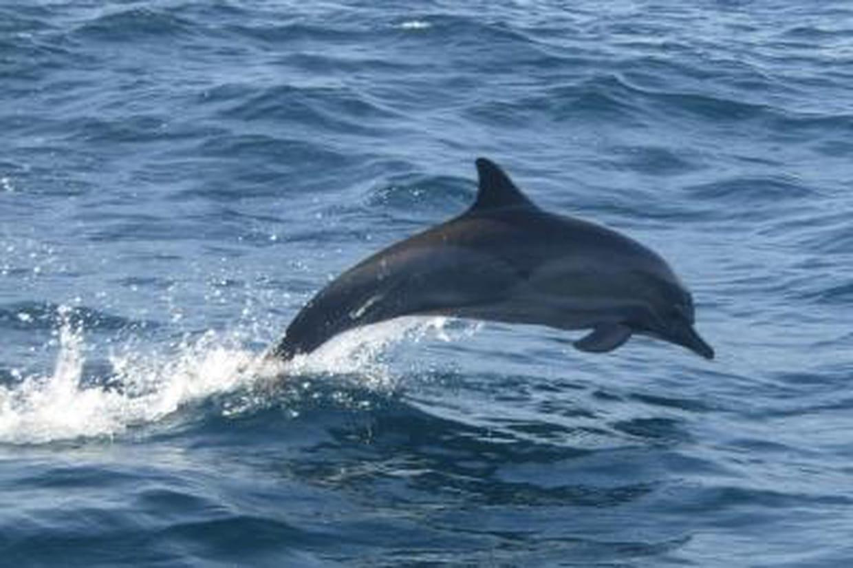 Tout savoir sur le dauphin - Dauphin dessin couleur ...