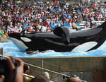 L'orque tueuse