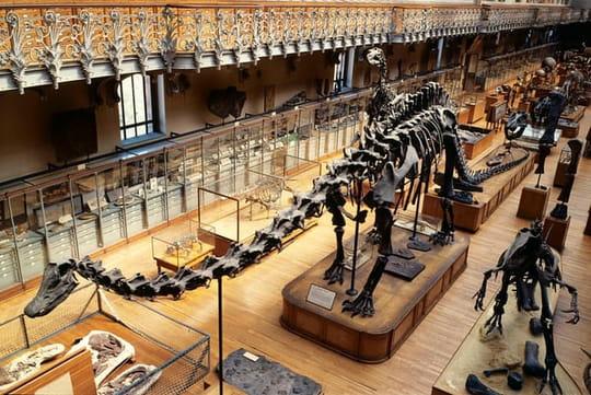 Museum d'histoire naturelle de Paris: ce qu'il ne faut pas manquer