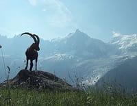 La France sauvage : Les Alpes, les sommets de l'extrême