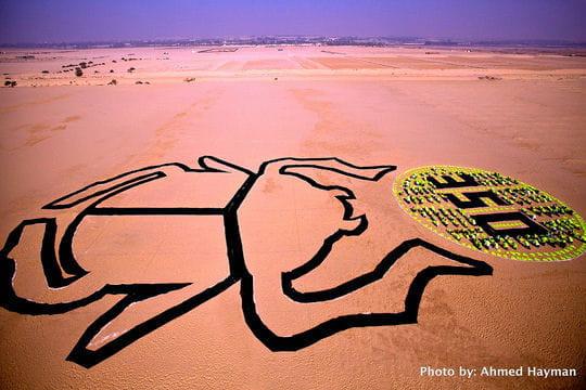 Scarabée Egypte