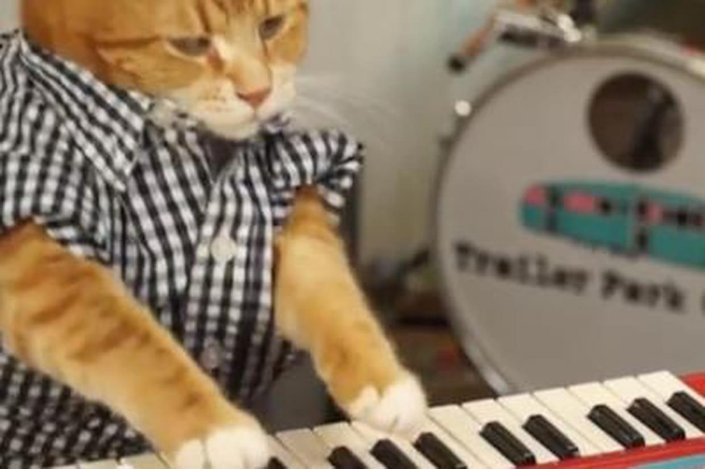 Un chat qui joue du clavier c 39 est le retour de keyboard cat - Chat qui dort sur son maitre ...