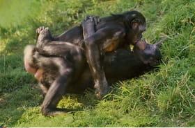 L'homosexualité chez les animaux : de nombreuses espèces concernées