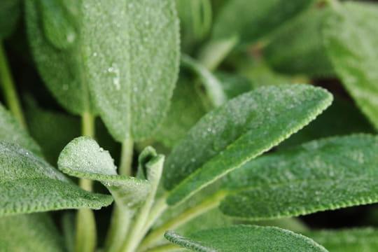 Ces plantes à cultiver et utiliser pour booster votresanté