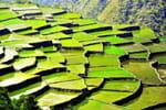 rizieres philippines
