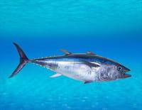 Pêche à haut risque : Nord contre Sud : Rapides comme l'éclair