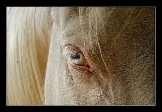 L'oeil équin