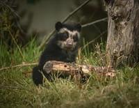 La vie secrète du zoo : Tempête en famille