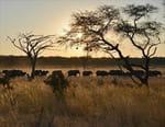 Marcher avec les éléphants