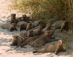 Botswana : à la vie, à la mort