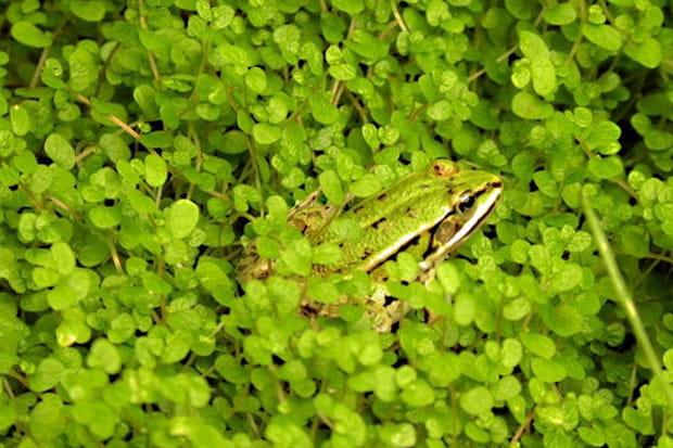 L'art du camouflage