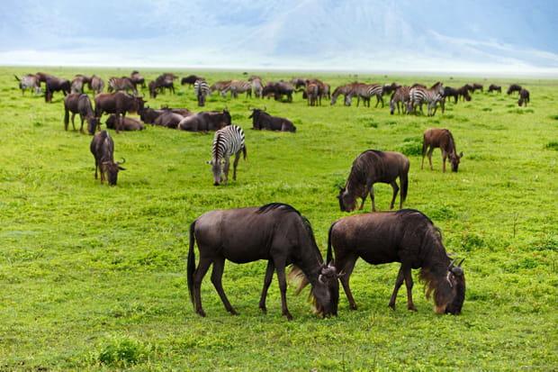 La plaine du Serengeti en Tanzanie