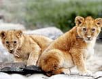 100 jours avec les animaux du Bioparc de Doué-la-Fontaine