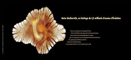 Un fossile vieux de 2,1milliards d'années