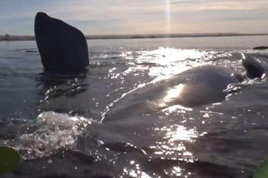 Une baleine soulève deux kayakistes sur son dos