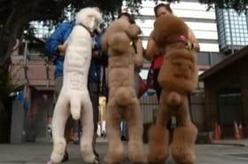 VIDEO - Cette toiletteuse sculpte des oursons et des têtes de lion sur le pelage des animaux