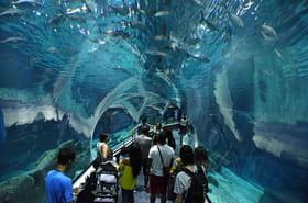 Plongez dans l'aquarium de Rio, le plus grand aquarium d'Amérique du sud