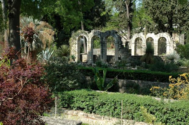 Plus ancien jardin botanique jardin des plantes de - Le jardin des plantes montpellier ...