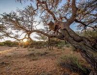Le monde des arbres : Souvenirs d'un acacia