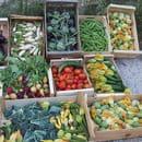 La Ferme Auberge de la Baie des anges  - récolte de notre potager -   © fermeauberge.fr