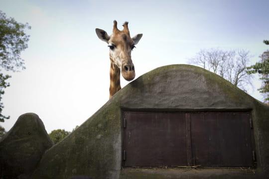 Zoo de Vincennes:  5nouvelles espèces animales pour ses 5ans