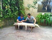 Une vie de bêtes : La ferme aux crocodiles