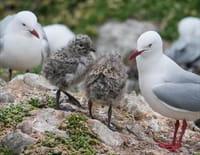 24 heures dans la nature : Nouvelle-Zélande, le monde perdu