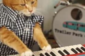 """Un chat qui joue du clavier ? C'est le retour de """"keyboard cat"""" !"""