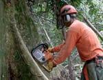 Forêts labellisées, arbres protégés ?