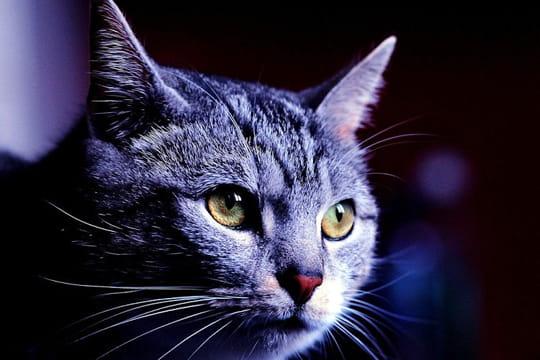 Un chat très pensif