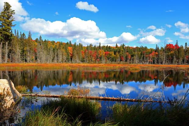 Les forêts du Québec