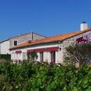 Restaurant : Auberge de la Gaillotière  - Vue des vignes -   © Auberge la Gaillotière