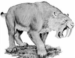 dessin d'un tigre à dents de sabre.