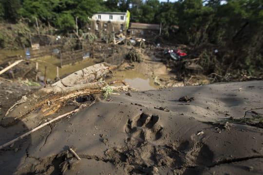 Inondations en Géorgie : des animaux sauvages échappés du zoo