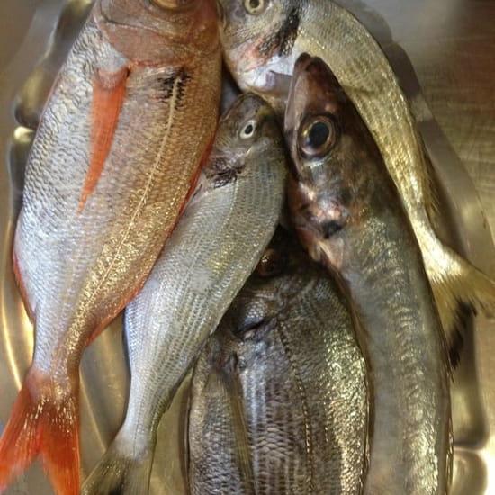 Plat : Lou Pebre d'Aïl  - La pêche du jour  -