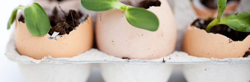 20choses à faire à la maison et dans le jardin avec des coquilles d'œufs