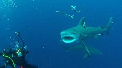 plongee requin didier bremont