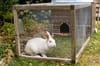 Clapier: comment fabriquer un abri pour lapins