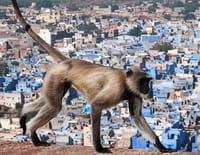 L'Inde sauvage : Le désert de Thar