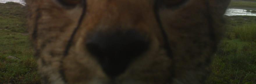 40 surprenants selfies d'animaux de la savane