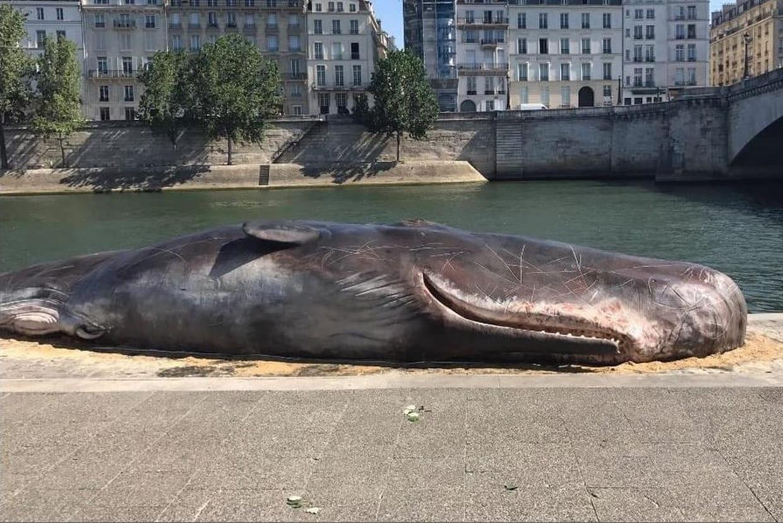 Une baleine échouée sur les quais de Seine — Paris
